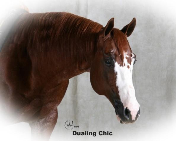 Little Valley Quarter Horses